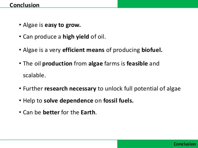 thesis on biodiesel from algae Tiny algae can play a big role in making algal biofuel production more efficient, less home » making algal biofuel production more efficient, less expensive.