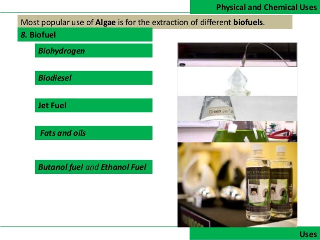 history use and description of chlorella a freshwater microalgae Modeling anaerobic digestion of microalgae  experimental data of an anaerobic digester fed with chlorella  of the freshwater microalgae chlorella.