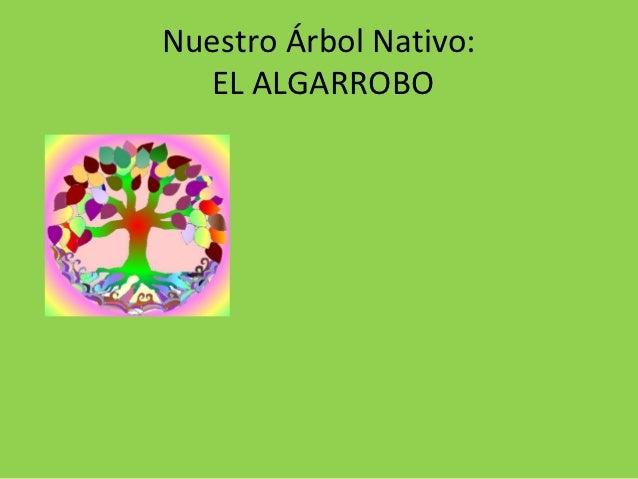 Nuestro Árbol Nativo:  EL ALGARROBO