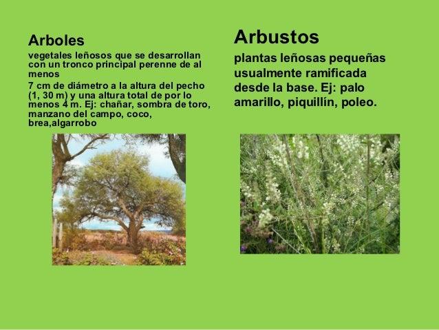 Algarrobo for Arboles con sus nombres y caracteristicas
