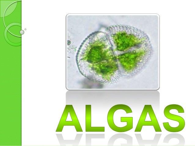 Algas Las algas son un grupo muy diverso, van desde seres microscópicos unicelulares hasta organismos multicelulares que f...