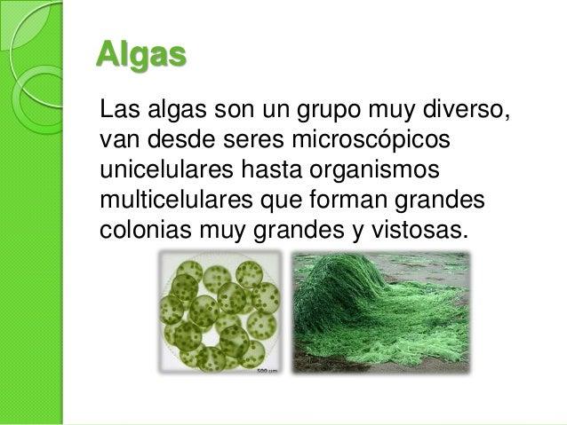 Algas Slide 2