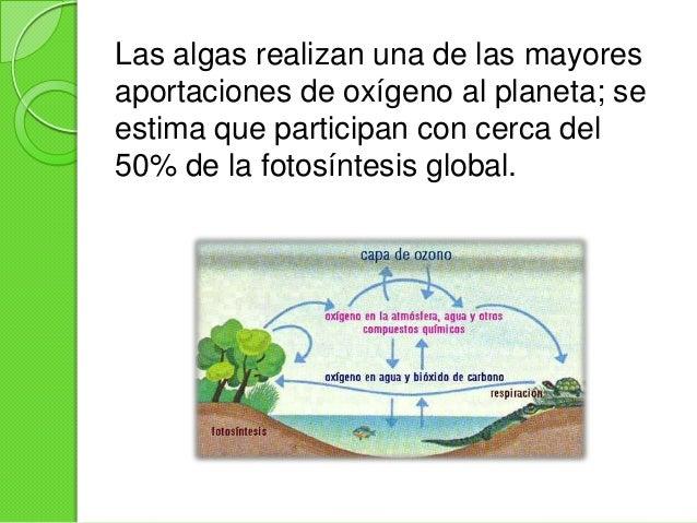 Algas Slide 3