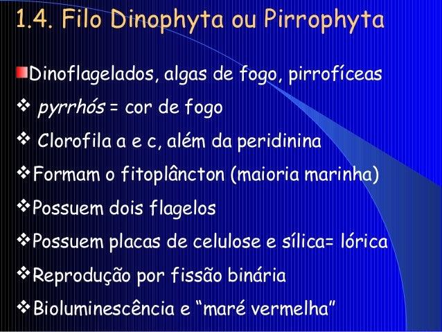 1.6. Filo Rhodophyta Rodófitas, rodofíceas ou algas vermelhas  rhodos = vermelho A maioria é pluricelular (multicelular)...