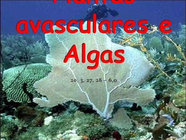 20, 3, 27, 28 – 6,0<br />Plantas avasculares e Algas<br />