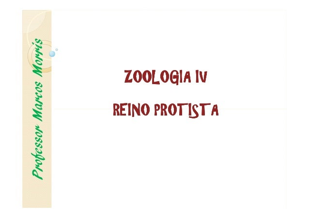 ZOOLOGIAZOOLOGIAZOOLOGIAZOOLOGIA IVIVIVIV REINOREINOREINOREINO PROTISTAPROTISTAPROTISTAPROTISTA ProfessorMarcosMorris REIN...
