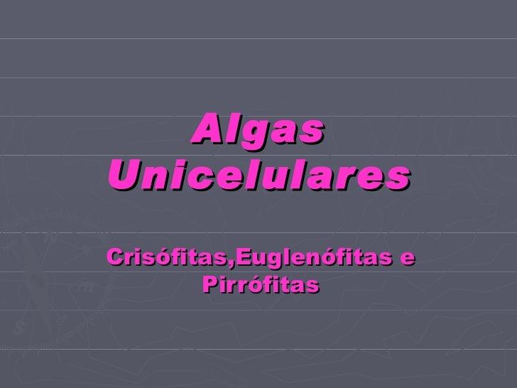 Algas Unicelulares Crisófitas,Euglenófitas e Pirrófitas
