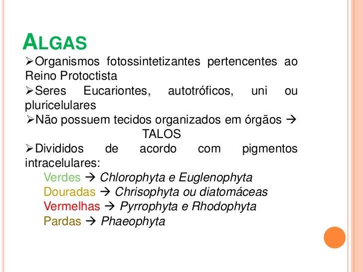 Algas uni e pluricelulares Slide 2