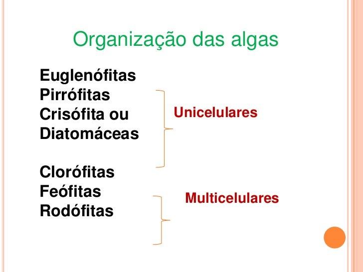 Algas uni e pluricelulares Slide 3