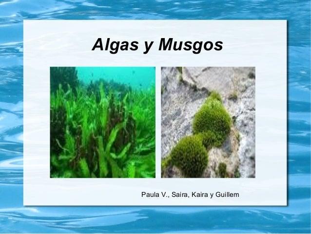 Algas y Musgos Paula V., Saira, Kaira y Guillem