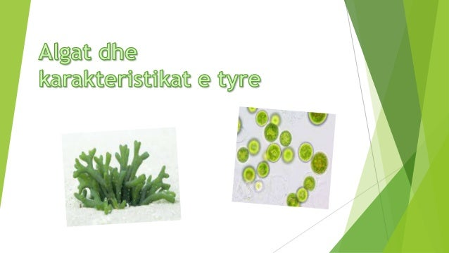  Algat janë bimë në qelizat e të cilave janë formuar organelet qelizore si: bërthama, mitokondritë, aparati i Golxhit, pl...