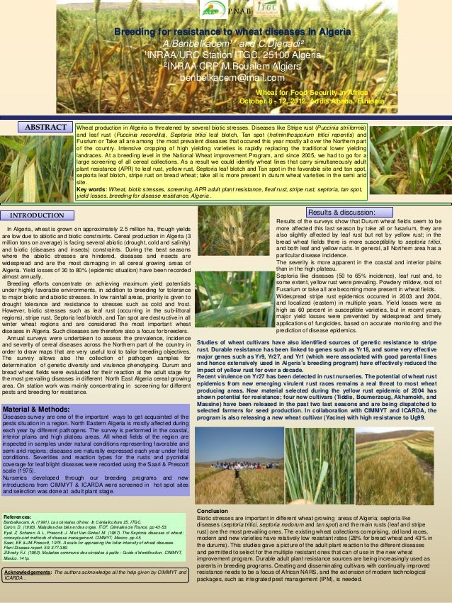 P.N.A.B                                                           Breeding for resistance to wheat diseases in Algeria    ...