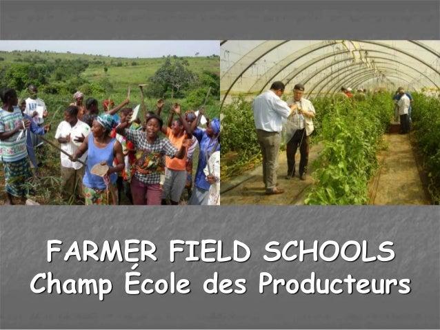 FARMER FIELD SCHOOLS Champ École des Producteurs