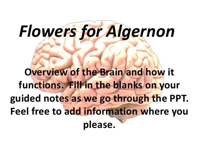 flowers for algernon summary