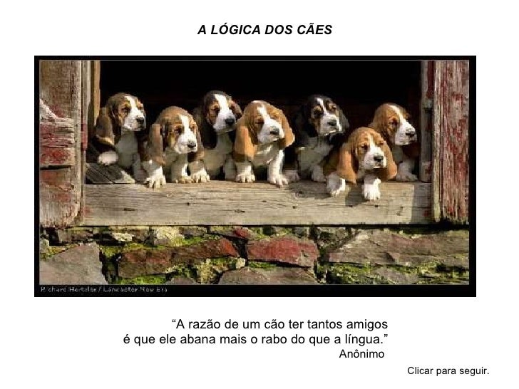 """A LÓGICA DOS CÃES  """"A razão deum cão ter tantos amigos é que ele abana mais ..."""