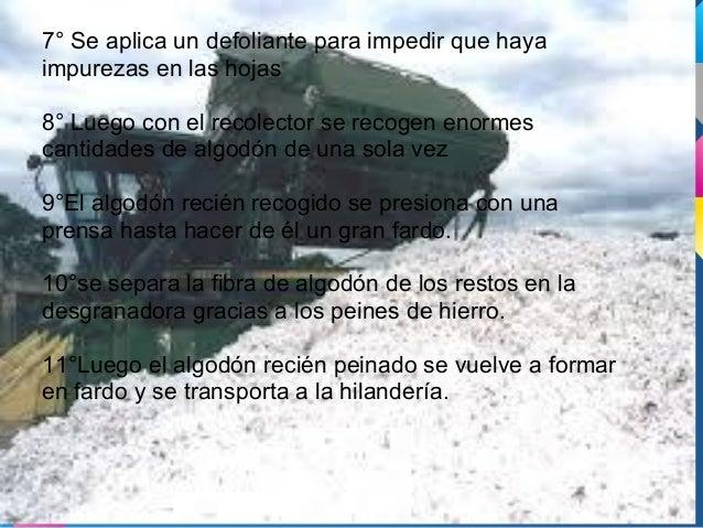 Argentina, un exportador más dealgodón en el mundo.El algodón argentino es conocidoy apreciado por más de 30países entre e...