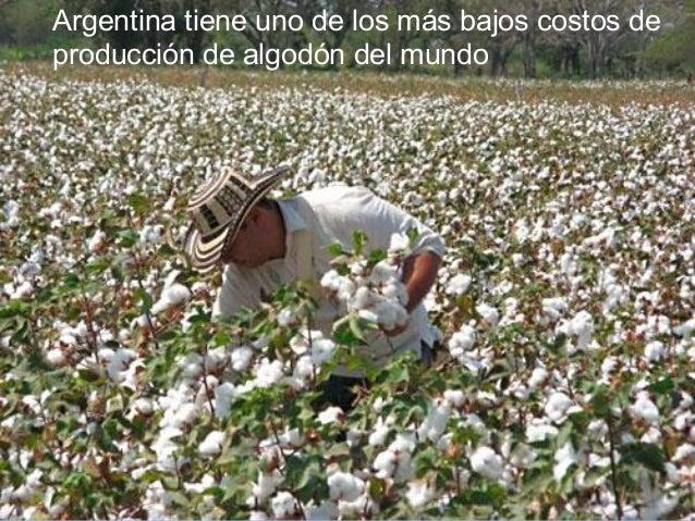 4° Después de que el plantón de algodón haya atravesado latierra, se empieza relativamente pronto con la eliminación dela ...