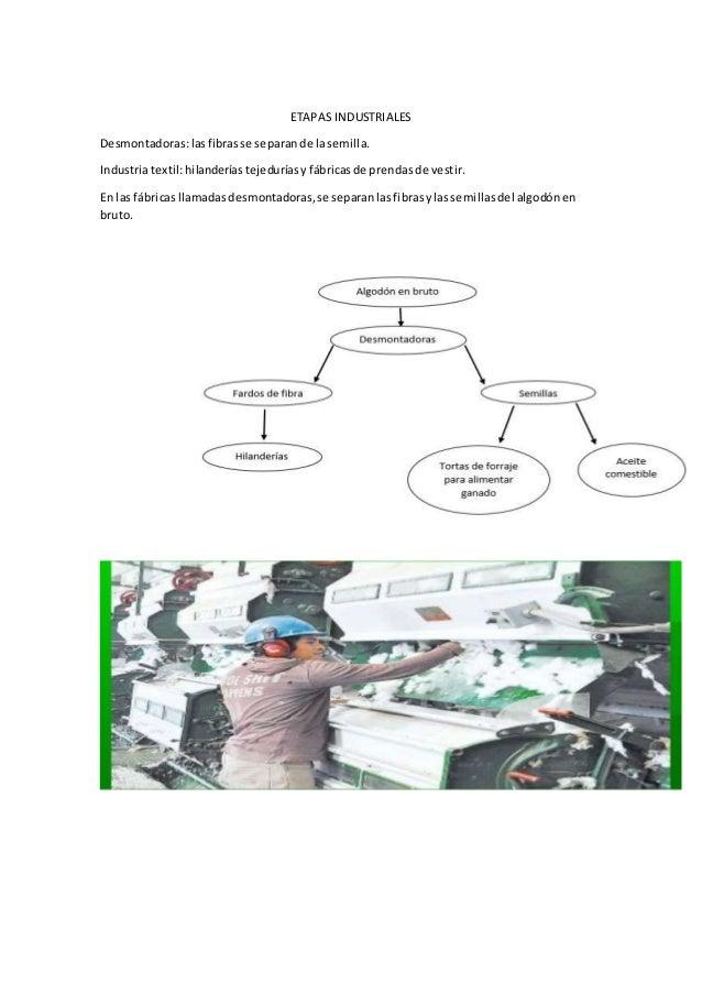 ETAPAS INDUSTRIALES Desmontadoras:lasfibrasse separande lasemilla. Industriatextil:hilanderíastejeduríasy fábricas de pren...