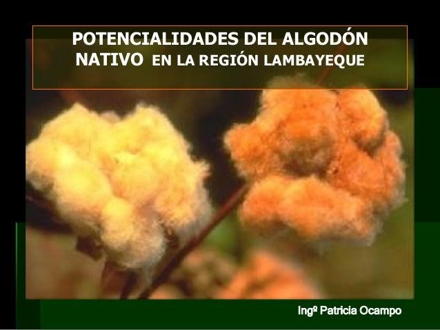 POTENCIALIDADES DEL ALGODÓN NATIVO EN LA REGIÓN LAMBAYEQUE  Ingº Patricia Ocampo
