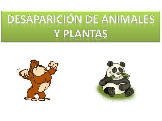 • Elpuma es unmamífero carnívoro. • El puma come cualquier animal que pueda capturar, desde insectos a los ciervos, su...