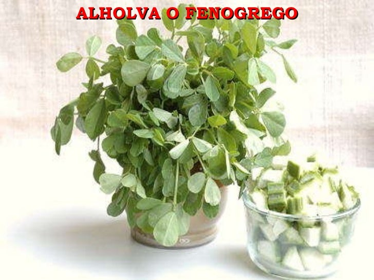 ALHOLVA O FENOGREGO