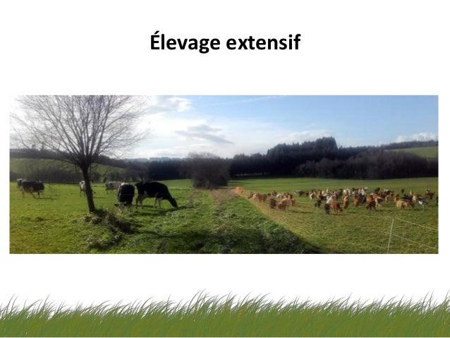 La Cabreta notre élevage ovin-caprin extensif - ALIBES BIOSCA Slide 2