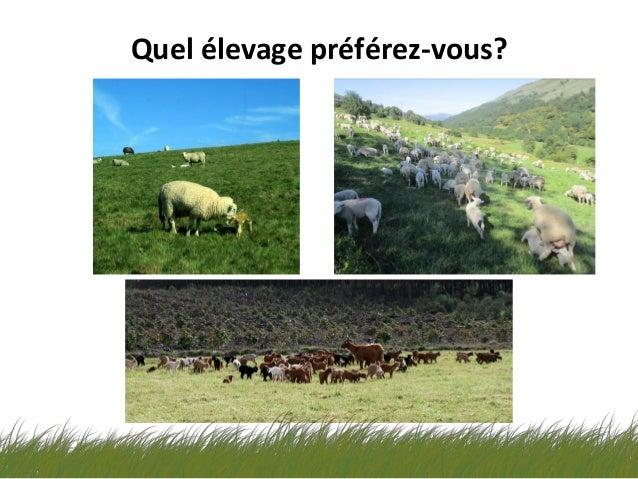 La Cabreta notre élevage ovin-caprin extensif - ALIBES BIOSCA Slide 3