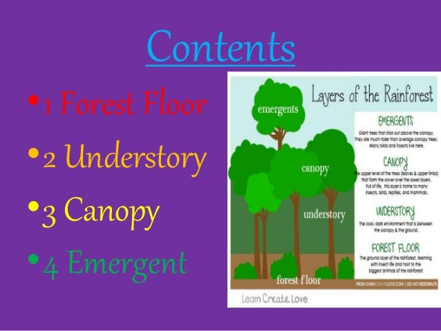 Contents O1 Forest Floor O2 Understory O3 Canopy O4 Emergent