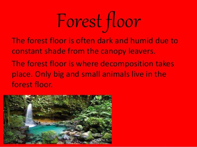 Canopy O4 Emergent 3 Forest Floor The