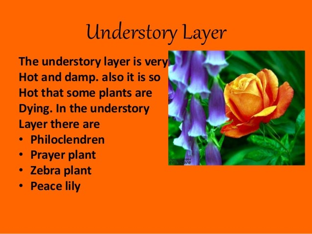 4 Understory Layer The