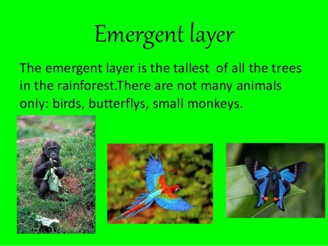 6 Emergent Layer The