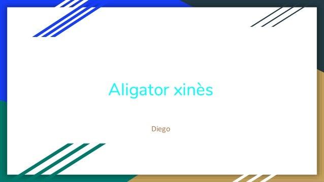 Aligator xinès Diego