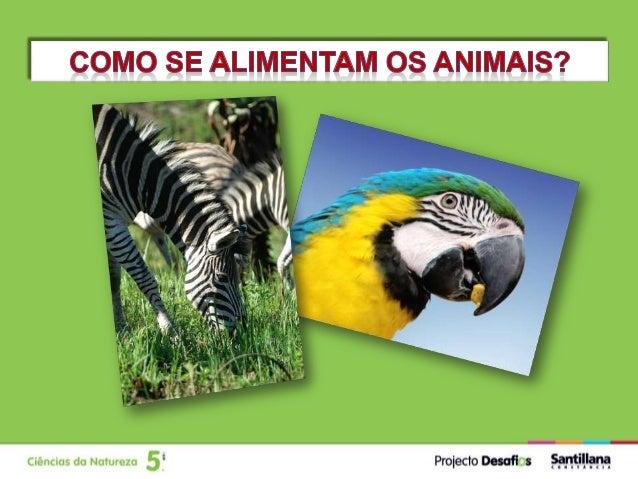 Tendo em conta o seu regime alimentar, os animais podem ser considerados: HerbívorosCarnívoros Omnívoros Alimentam-se de o...