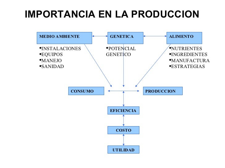 Alimentacion animal for Concepto de oficina y su importancia
