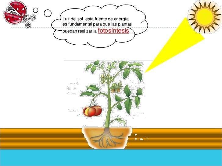 Alimentacion de las plantas - Cuidados de una hortensia ...
