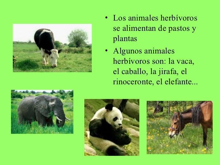Alimentacion de los animales for Como se llaman las plantas ornamentales