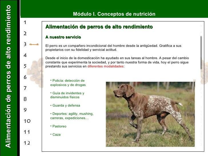 Alimentación de perros de alto rendimiento   A nuestro servicio El perro es un compañero incondicional del hombre desde la...