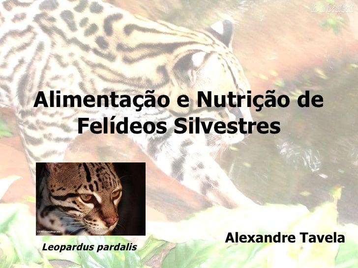 Alimentação e Nutrição de Felídeos Silvestres Alexandre Tavela Leopardus pardalis