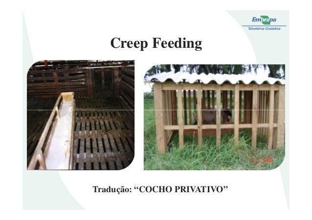 """Creep FeedingTradução: """"COCHO PRIVATIVO"""""""