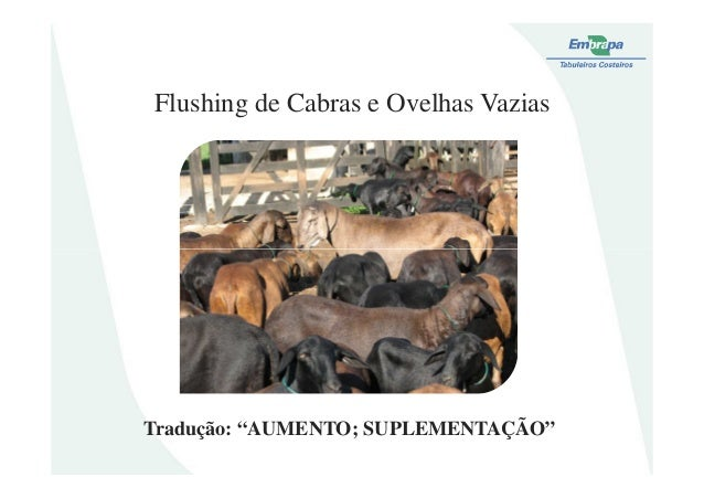 """Flushing de Cabras e Ovelhas VaziasTradução: """"AUMENTO; SUPLEMENTAÇÃO"""""""