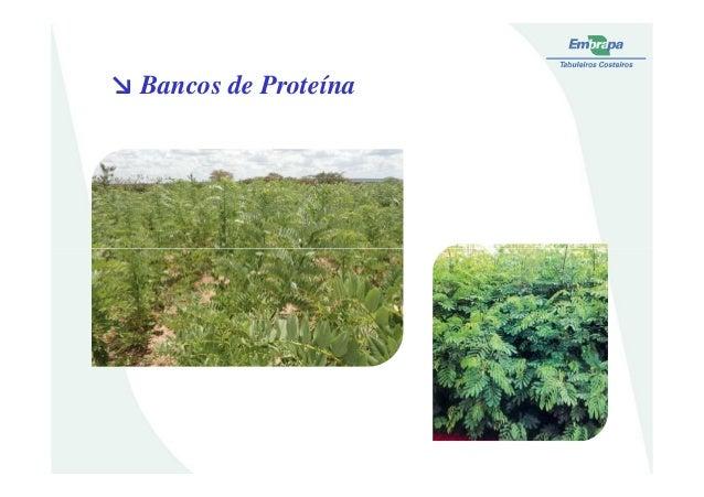 ↘ Bancos de Proteína