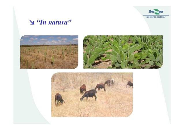 "↘ ""In natura"""