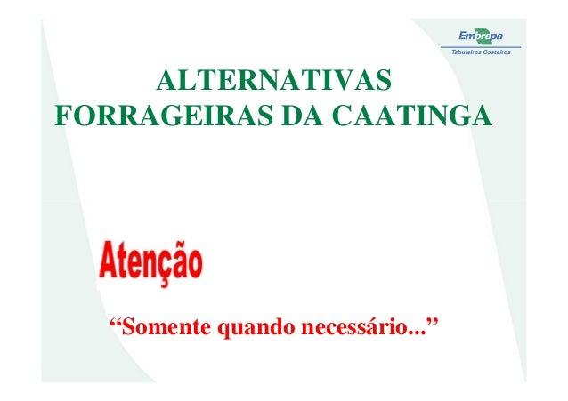"""ALTERNATIVASFORRAGEIRAS DA CAATINGA""""Somente quando necessário..."""""""