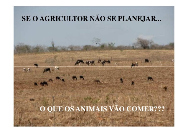 SE O AGRICULTOR NÃO SE PLANEJAR...O QUE OS ANIMAIS VÃO COMER???
