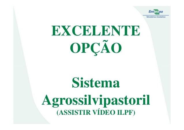 EXCELENTEOPÇÃOSistemaAgrossilvipastoril(ASSISTIR VÍDEO ILPF)