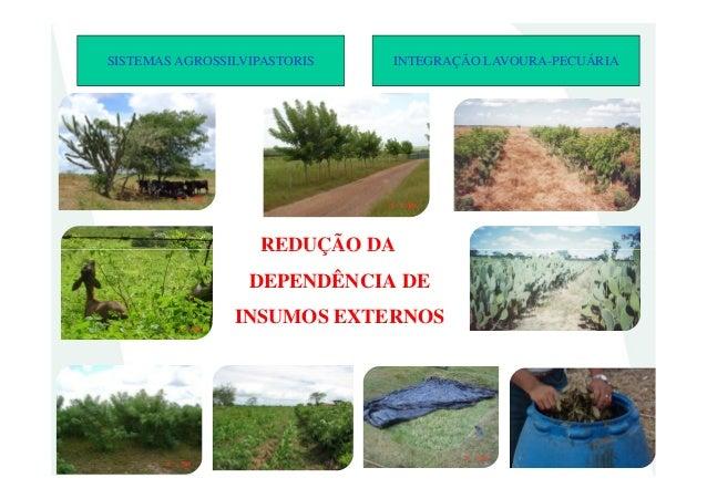 REDUÇÃO DASISTEMAS AGROSSILVIPASTORIS INTEGRAÇÃO LAVOURA-PECUÁRIAREDUÇÃO DADEPENDÊNCIA DEINSUMOS EXTERNOS