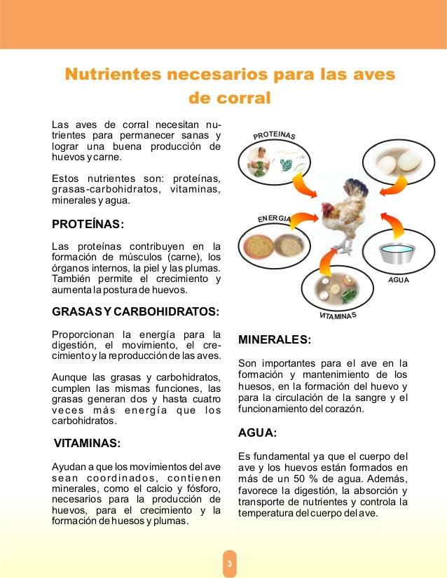 Alimento artesanal para aves - Alimentos para el crecimiento ...