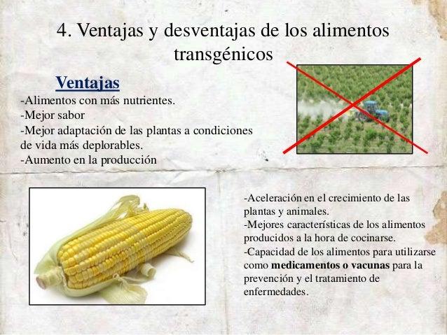 Alimentos transgenicos 1 bac a - Ventajas alimentos transgenicos ...