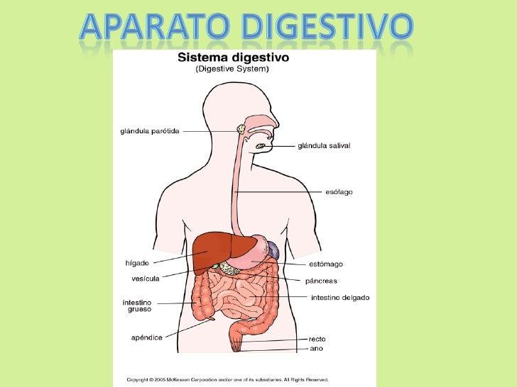 Alimentos y sistema digestivo