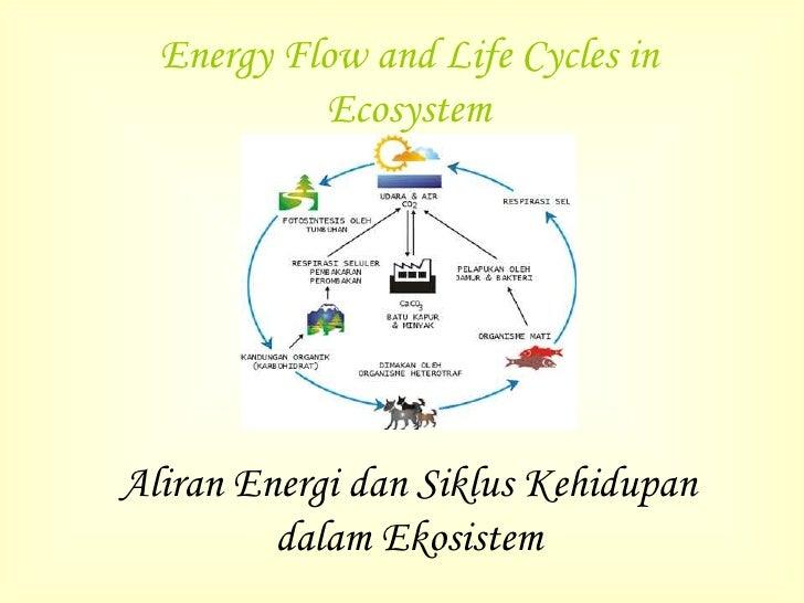 Aliran energi dan siklus kehidupan dalam ekosistem kel 34 x ccuart Gallery